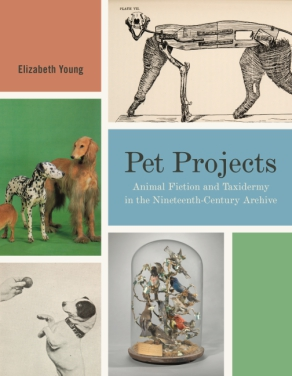 Cover image for Pet Projects: Animal Fiction and Taxidermy in the Nineteenth-Century Archive By Elizabeth Young